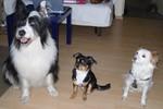 Momo, Leni und Mylow, unsere Hunde