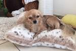 Bailey, der Hund